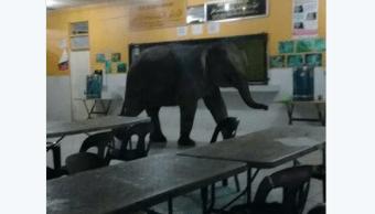 Un elefante irrumpe en una escuela de Malasia causando el pánico