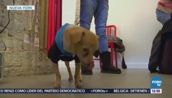 Estrenan cafetería para perros en Nueva York