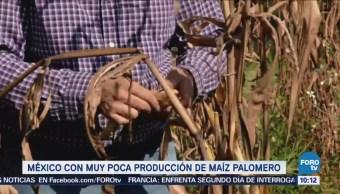 Extra Extra: México produce poco maíz palomero