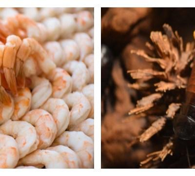 ¿De verdad las cucarachas y los camarones son lo mismo?