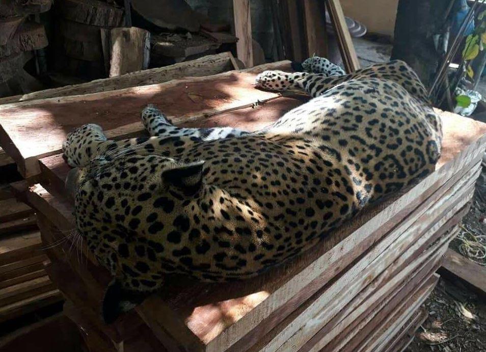 Profepa asegura tarántulas, geckos y otros animales en Puebla