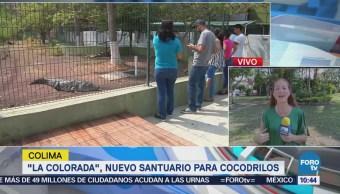 """La laguna """"La Colorada"""", nuevo santuario para cocodrilos en Colima"""