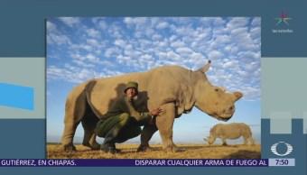 Muere el último rinoceronte macho blanco que había en el mundo