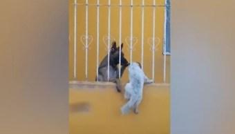 Bunny el perro y su amigo