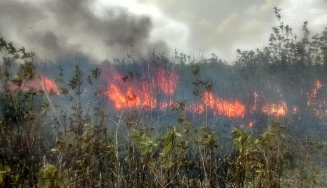 Cazadores furtivos provocan incendio en reserva natural de Campeche