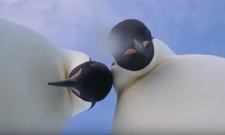 Dos pingüinos se toman una selfie en la Antártida