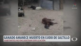 Productores de Coahuila alertan por presunto 'chupacabras'