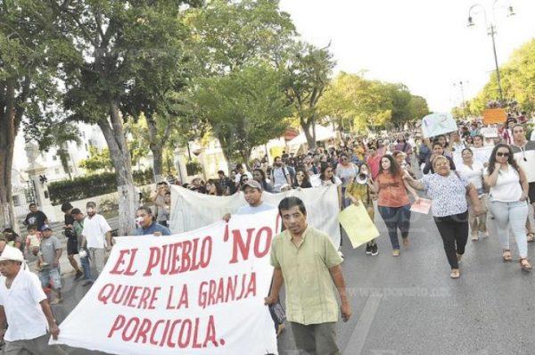 Indígenas mayas de Homún rechazan criadero de cerdos cerca de cenotes