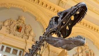 Subastarán París esqueleto dinosaurio no identificado