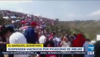 Suspenden viacrucis por picaduras de abejas en Querétaro