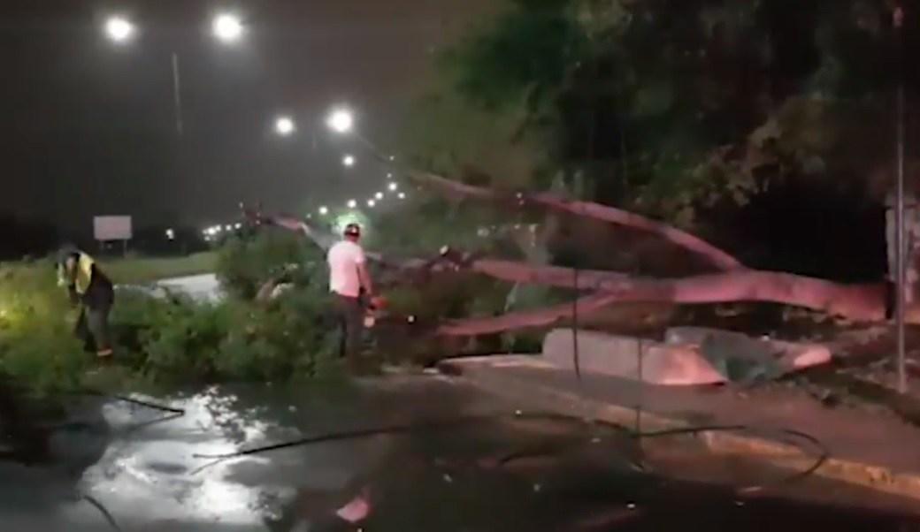 Lluvia y granizo en Nuevo Laredo dejan árboles caídos y