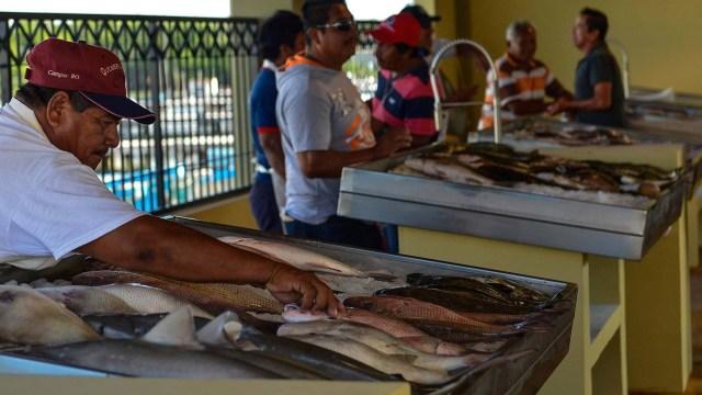 Venden pescado a bajo costo en Campeche; comercializarán 5 toneladas
