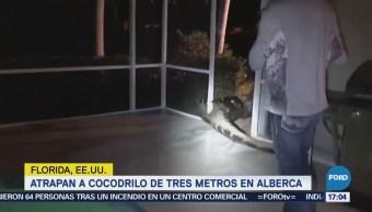 Atrapan Cocodrilo Tres Metros Alberca Florida