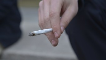 SCJN otorga segundo amparo para cultivo y consumo de marihuana