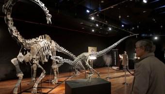 Pagan 3.46 mdd por dos esqueletos de dinosaurio en subasta en París