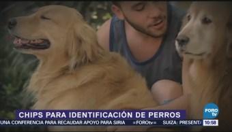 Chips para identificación de perros