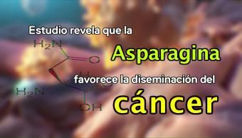 Cuide su salud en 1 minuto: Consumo de asparagina- Micronutrientes- Micro engaños
