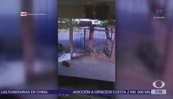 Entrega de flores, nueva forma de robo a viviendas en Monterrey