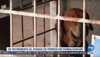 Se incrementa el ataque de perros en Chimalhuacán