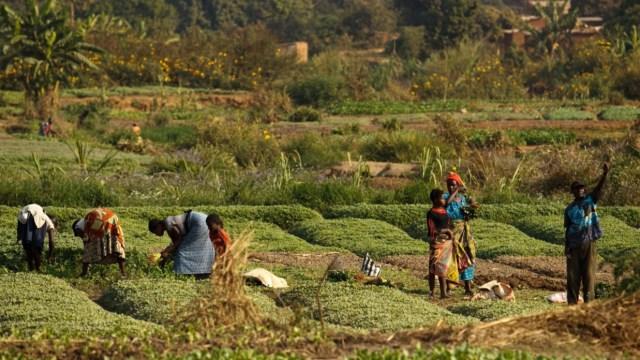 FAO llama a fortalecer el papel de la agroecología