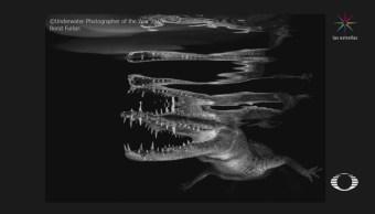 Fotografías Ganadoras Concurso Bajo Agua Reino Unido