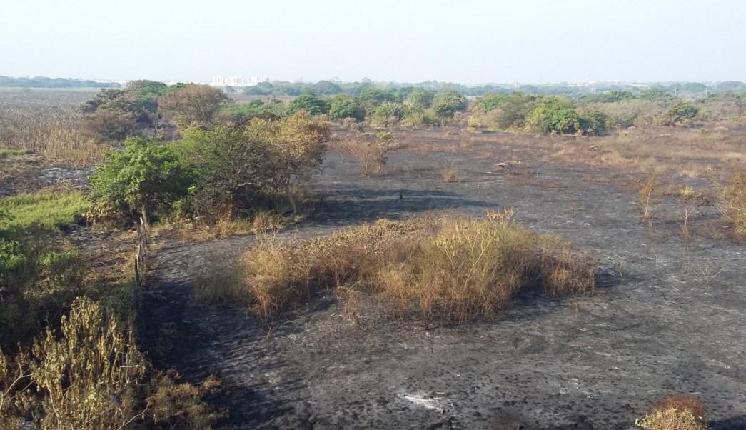 Incendio afectó 346 hectáreas en zona de Tembladeras, Veracruz