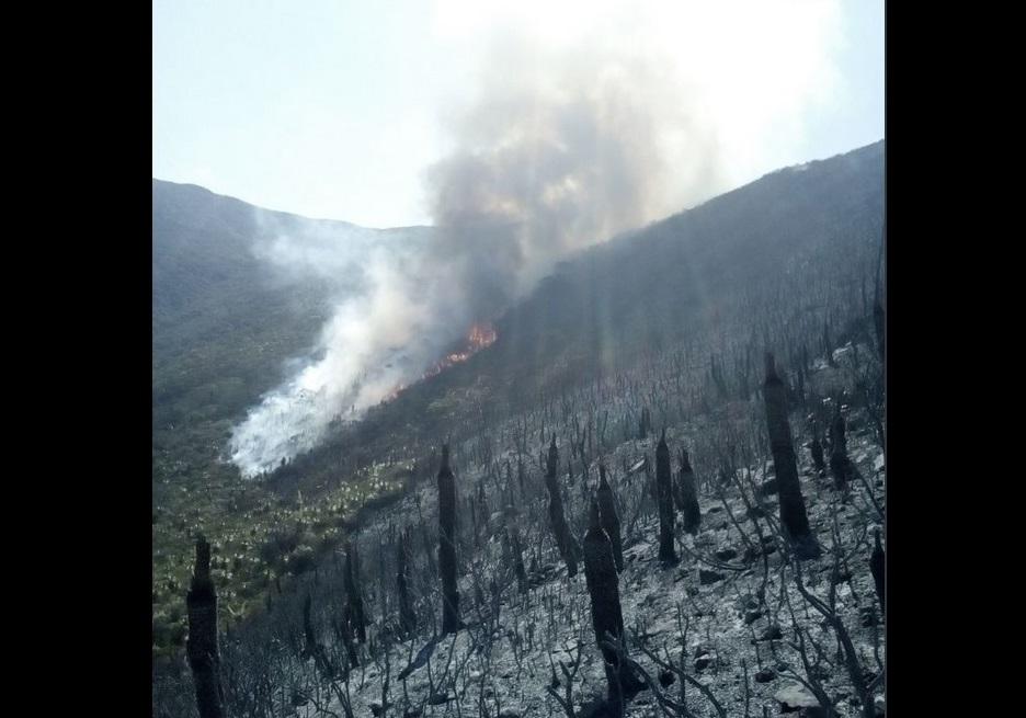 Combaten tres incendios forestales en Tamaulipas