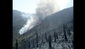 Reportan tres incendios forestales activos en Tamaulipas