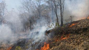 Suman 18 incendios forestales en lo que va del año Sinaloa: Conafor