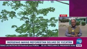 Indígenas Mayas Inician Reforestación Selvas Yucatecas