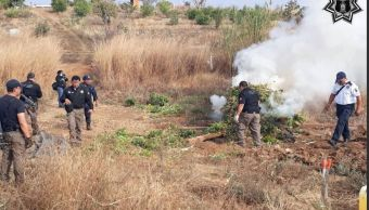 Incineran plantío de marihuana en Oaxaca