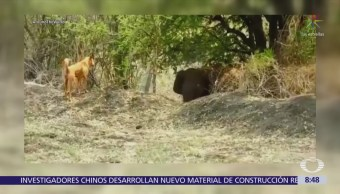 Perro ahuyenta a elefante en India