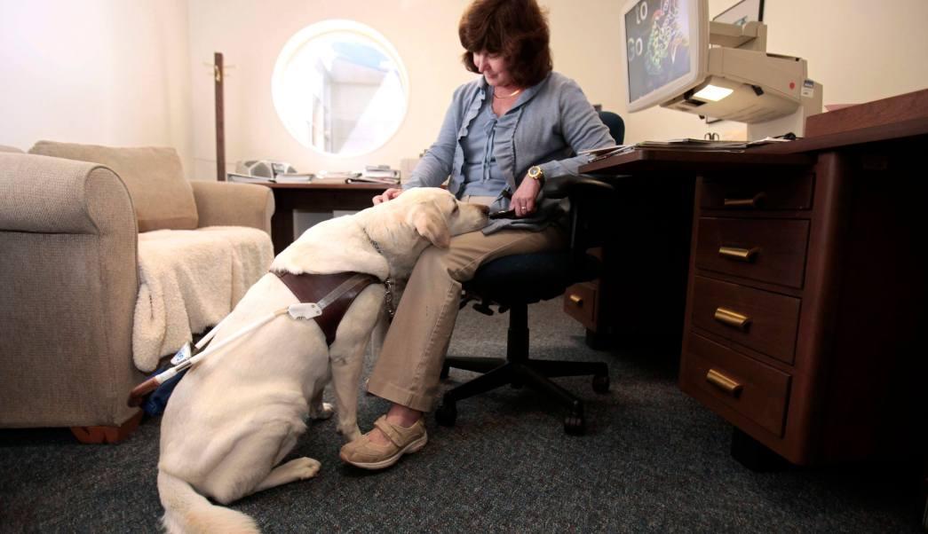 Diputados abren la puerta de todos lados a perros de servicio