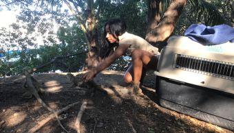 Profepa libera 7 iguanas verdes y 5 boas en Jalisco