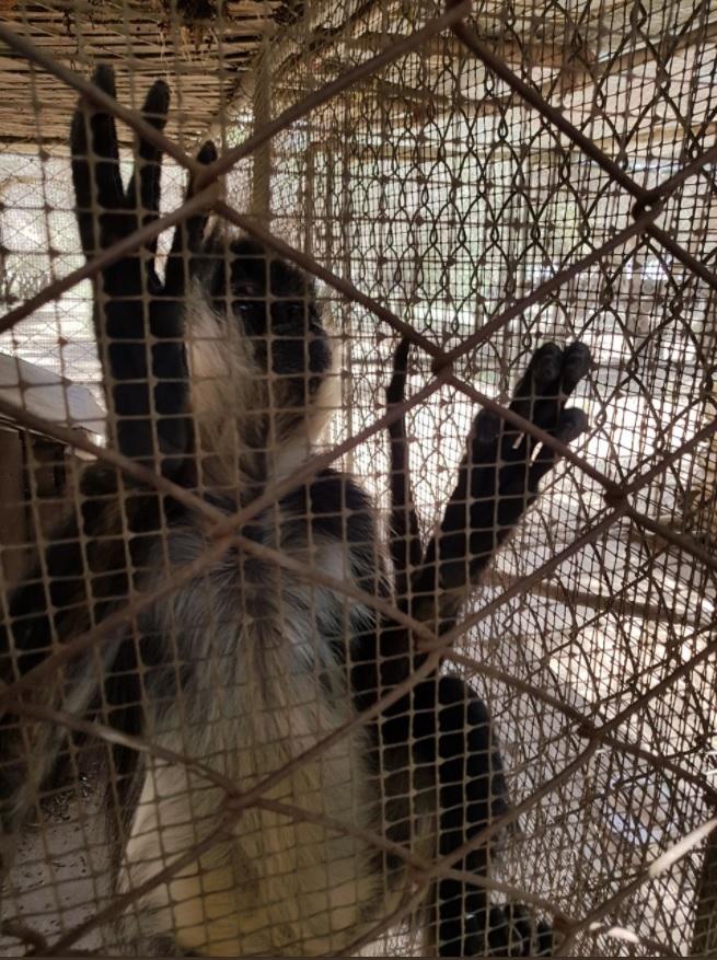 profepa asegura mono araña en ensenada baja california