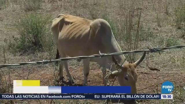 Sequía Afecta 13 Municipios Sinaloa