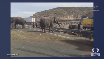 Vuelca Tráiler Elefantes España Carretera De Albacete
