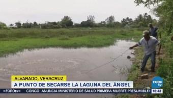 Seca Laguna Del Ángel Alvarado, Veracruz
