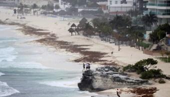 'Alberto' provoca aumento de sargazo en playas
