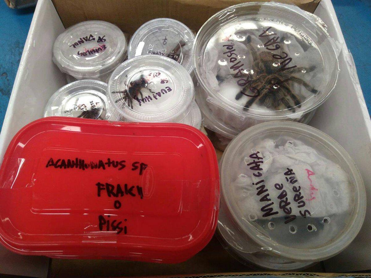 Asegura Profepa tarántulas en paquetería de Jalisco