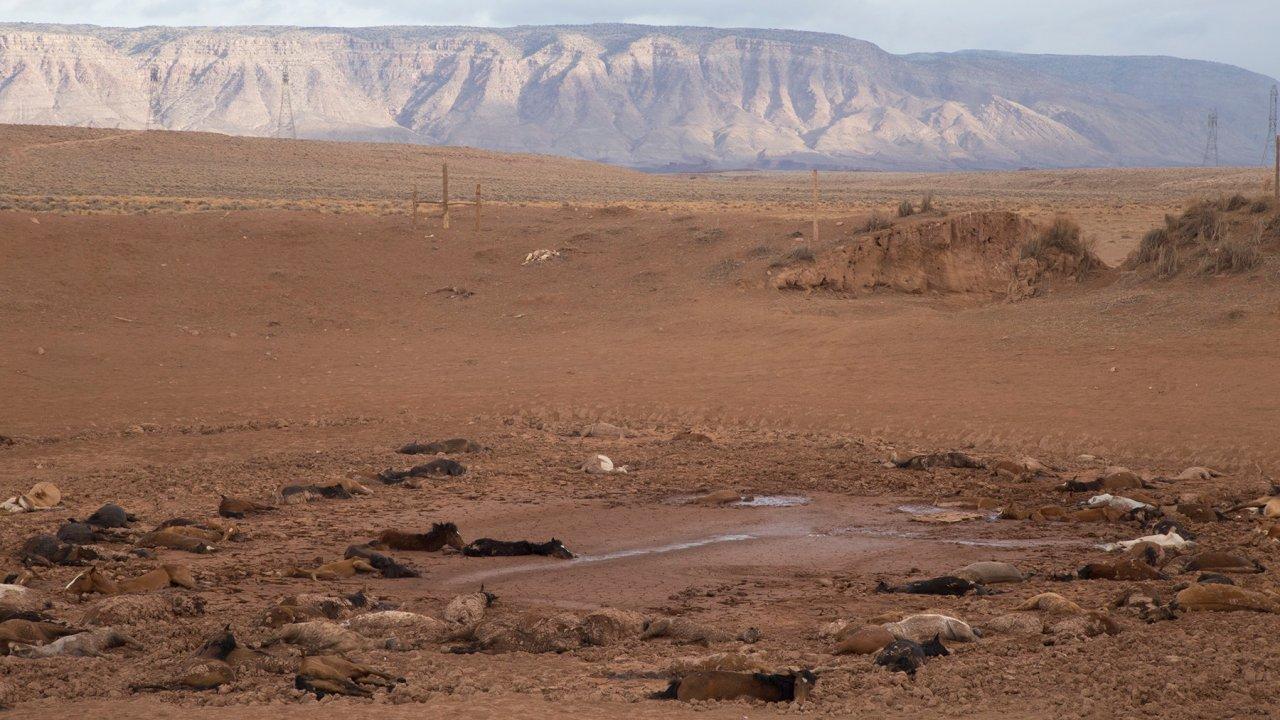 Encuentran a 200 caballos muertos en Arizona