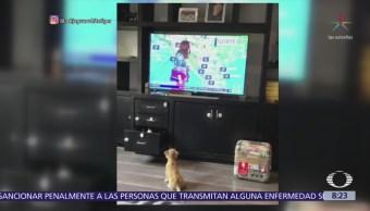 Cachorro de tigre espera reportaje de la Fundación Black Jaguar