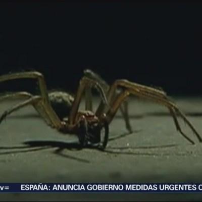 Científicos de la UNAM crean antídoto a veneno de la araña violinista
