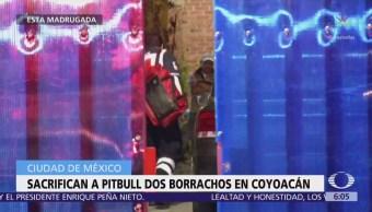 Dos hombres en estado de ebriedad sacrifican a perro pitbull en Coyoacán