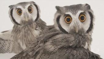 'El Arca de las Fotos', animales en peligro de extinción