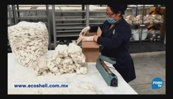 Empresa mexicana Ecoshell