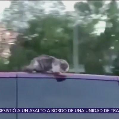 Familia olvida a gato sobre toldo de coche mientras conduce