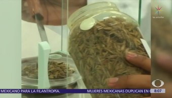 Herbolaria mexicana, patrimonio más importante de los pueblos ancestrales
