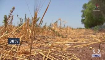 Reportan Sequía Extrema Sonora