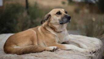 Aumenta 20% la cifra de perros y gatos abandonados en México